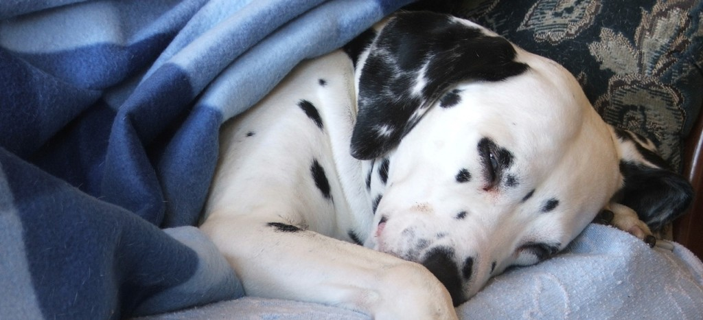 Airco Slaapkamer Stil : ... lief ook: huisdieren hou je het best ...